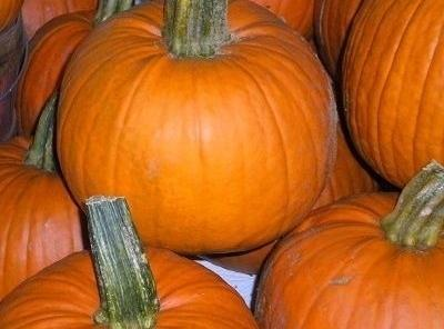 October Pumpkin Pot Recipe