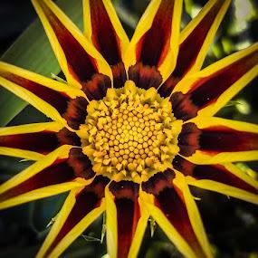 A Neighbors Flower by Anne LiConti - Flowers Single Flower ( #macrophotography, #singleflower, #macro, #photography, #flower,  )