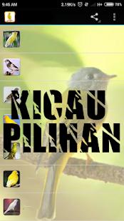 Kicau Srigunting - náhled