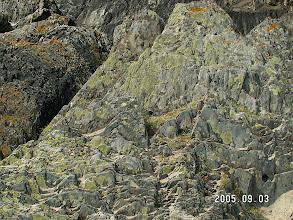 Photo: Two kinds of algae.  Portmeirion, Wales.