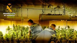 En el interior de la vivienda se encuentran más de 300 plantas de marihuana.
