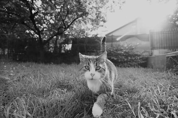 Passo felino in controluce di lcanest