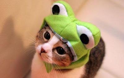シュレックの長靴を履いた猫に近い感じのネコ
