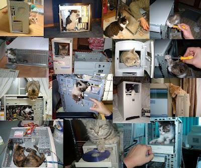 PC組立工場で働く猫がかわいすぎる