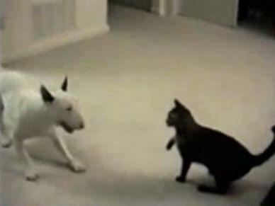 何と戦っているのかわからなくなる犬がPOP