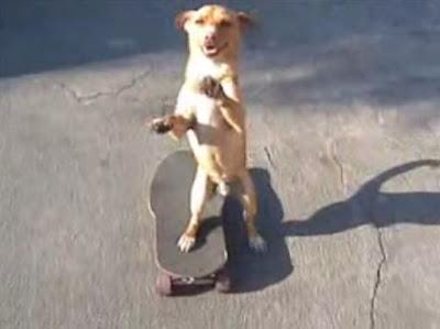 スケートボードでプッシュが出来る犬