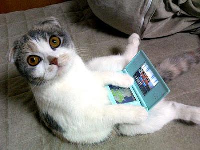 DSをあたかも操作しているような猫ちゃんの写真