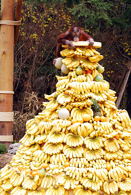 バナナの宝石箱や~