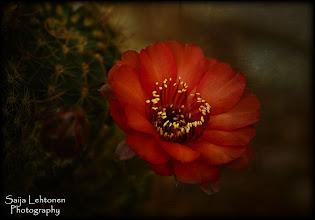 Photo: © Saija Lehtonen Photography - All Rights Reserved.      http://saija-lehtonen.artistwebsites.com