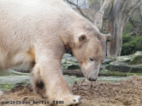 Photo: Den muss Knut erst einmal genauer begutachten ;-)