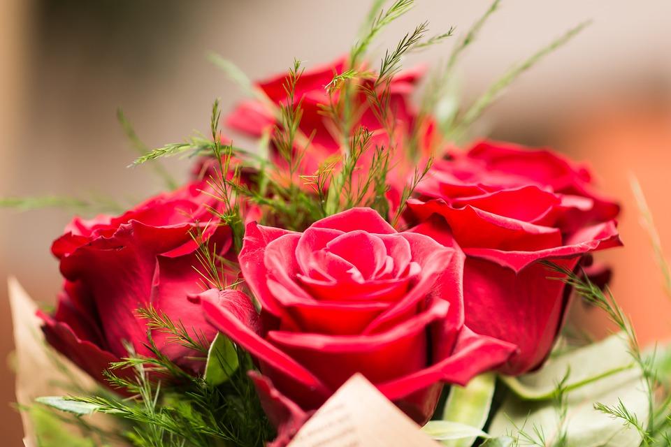 Rosas para San Valentín: qué significado tiene cada color