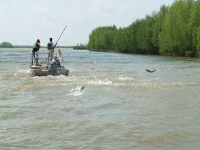 Zdjęcie: Tołpygi szaleją w Luisianie (fot. )