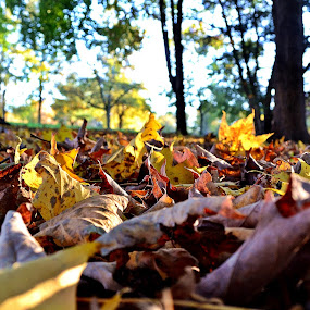 by Jamie Auletta - Nature Up Close Leaves & Grasses ( fall leaves on ground, fall leaves )