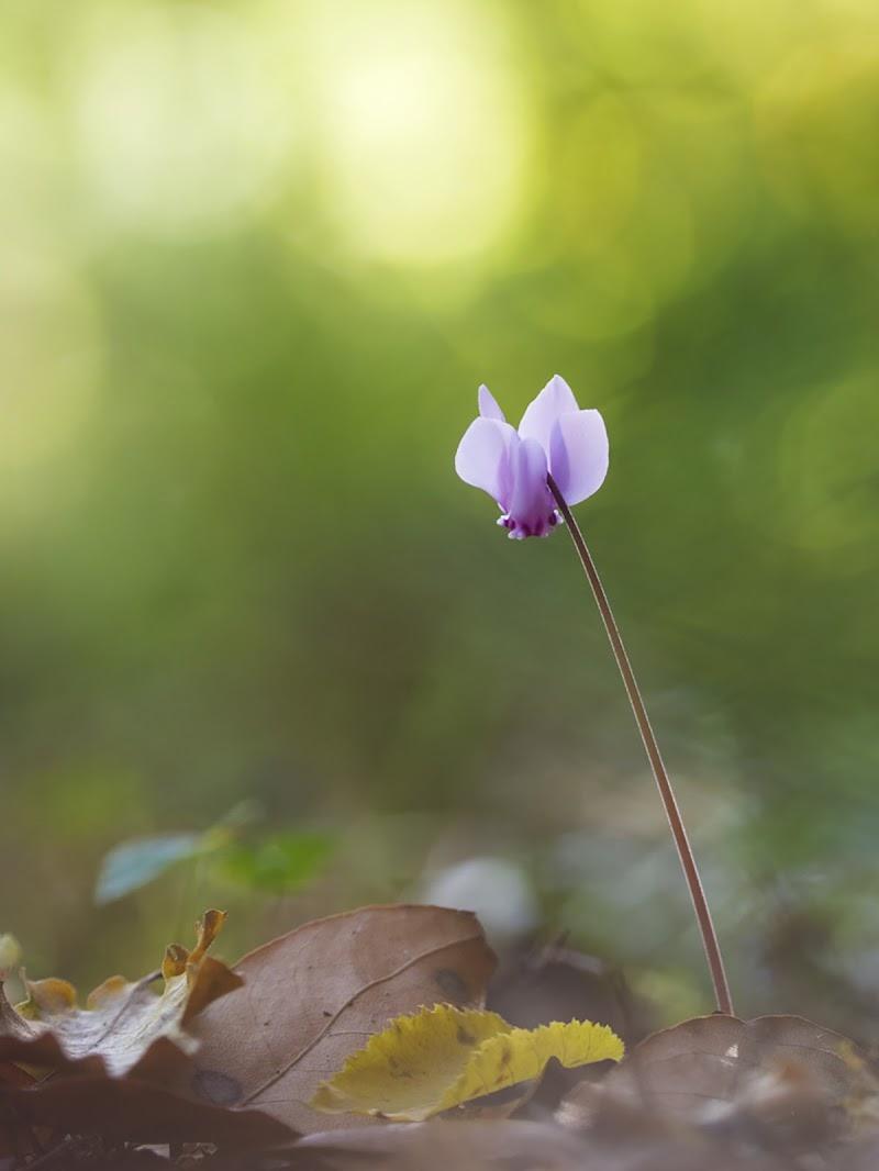 il fiore della diffidenza di 𝑮𝒂𝒃𝒓𝒊𝒆𝒍𝒆 𝑷𝒂𝒓𝒅𝒊𝒏𝒊