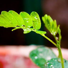 Green leaves by Roshan Tabasum - Nature Up Close Leaves & Grasses ( green, green leaves, trees, leaves,  )