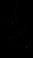 Nomad.PDX logo