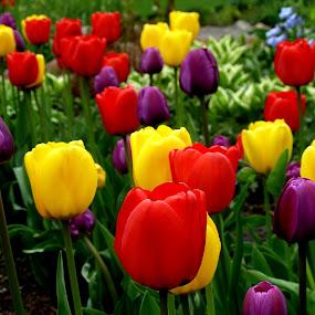 by Barbara Lokken - Flowers Flower Gardens (  )