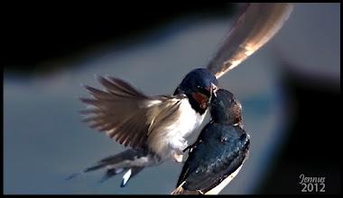 Photo: Feeding the Baby Birds