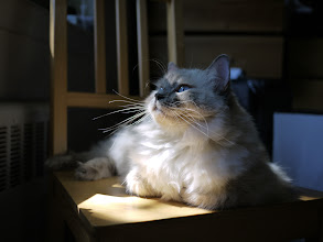 Photo: Her Imperial Zoeness