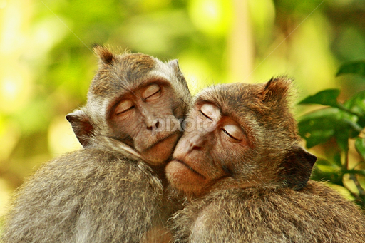 Image of: Pet Deeply In Love By Agus Supriyanto Animals Other Mammals Love Nature Primate Pixoto Deeply In Love Other Mammals Animals Pixoto