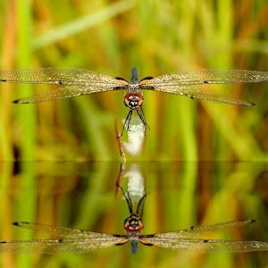 dragonfly 21.jpg