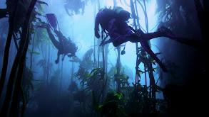 Deep Sea Encounters thumbnail