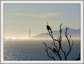 Photo: Blackbirds, Cesar Chavez Park, Berkeley