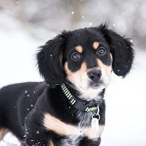 puppy 11-2893.jpg