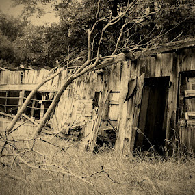Ol' Chicken Coop by Nikki Scott - Buildings & Architecture Other Exteriors ( old, building, abandoned )