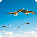 Birds Flying Wallpaper icon