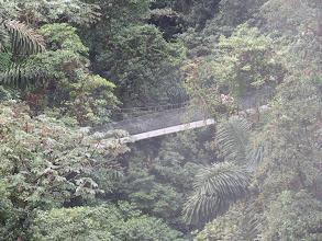 Photo: Suspension bridges enhance rain forest canopy travel and views.