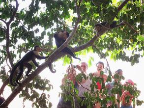 Photo: Monkeys posing for tourists