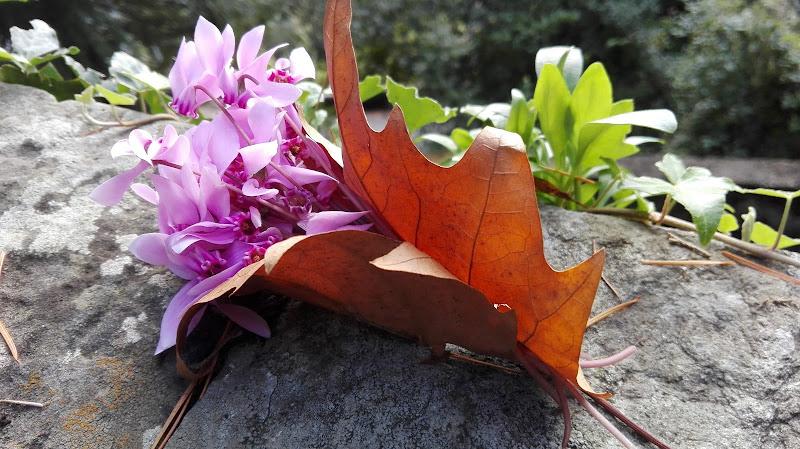 L'abbraccio dell'autunno di FLORANS