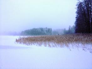 Photo: 002 Gapern in de mist