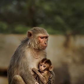 Mother & child  by Kallol Bhattacharjee - Animals Other Mammals ( love, sweet, baby, cute, nikon, light,  )
