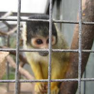 Wilhema Zoological Botanical Garden
