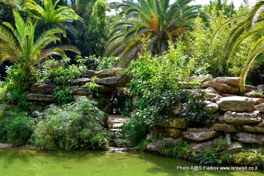Уголок тропического сада в Тель-Авиве. Экскурсия по Тель-Авиву.