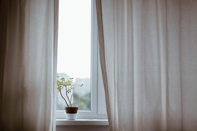Curtains, Decoration, Indoors, Plant, Pot Plant, Window