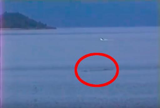 Aparición de Monstruo en el lago villarrica