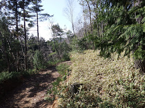 林道の上を進む