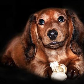 by Irene Orloff - Animals - Dogs Portraits