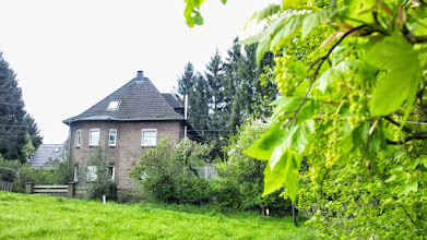 Photo: An der Tückingschulstraße blühen Anfang Mai die Bäume - ein Blick entlang des ,Rauten-Wegs' des Sauerländischen Gebirgsvereins.
