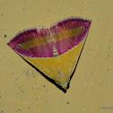 Banner Moth