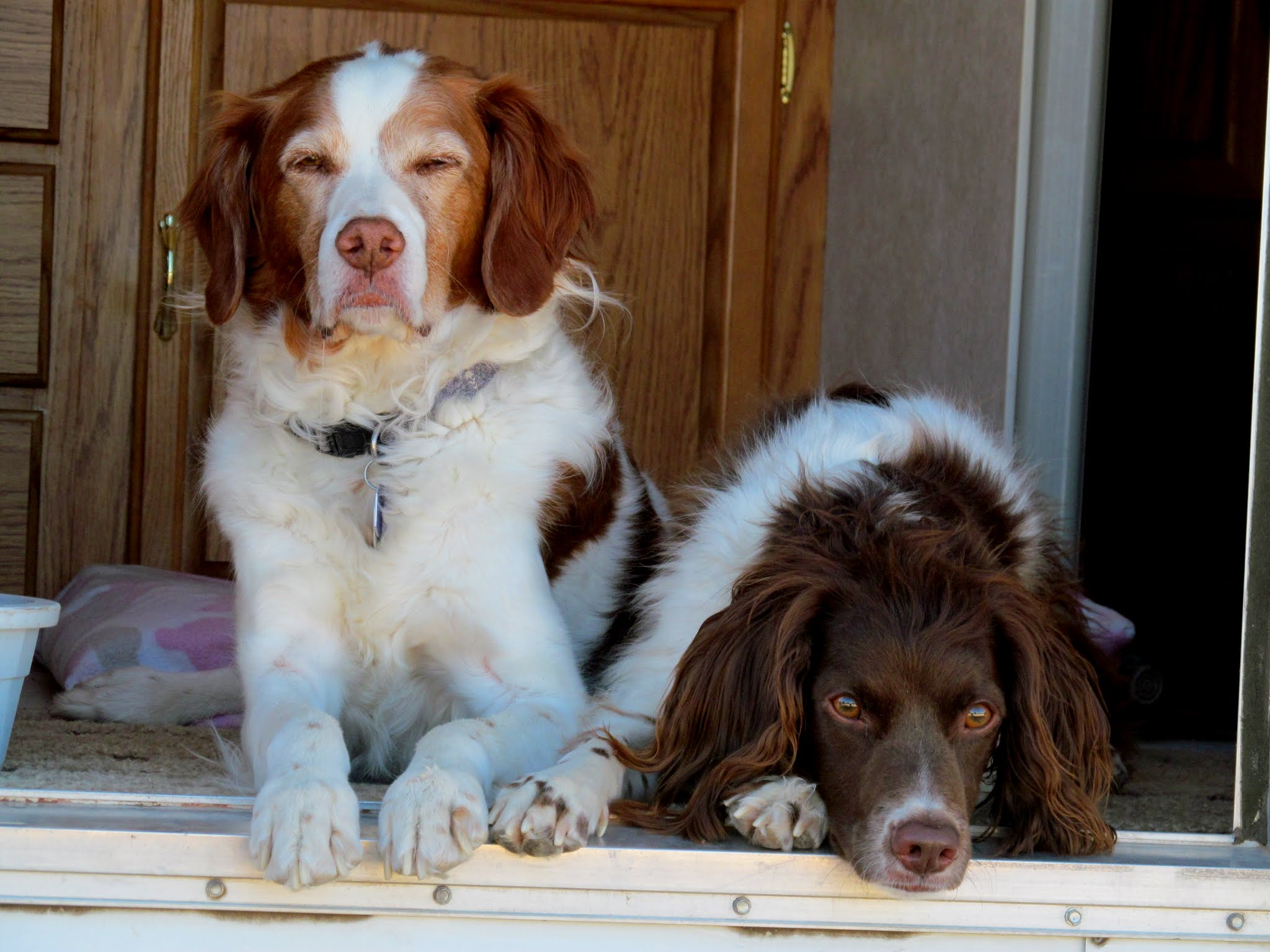 Photo: Torrey and Boulder in the camp trailer