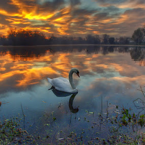 Colorful dawn by Boris Frković - Landscapes Waterscapes