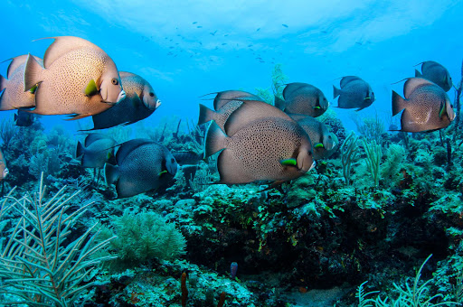 Belize-Great-Barrier.jpg - Fish in the Great Belize Barrier Reef.