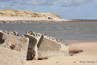Photo: Coastal Defences and Seals at Ythan Estuary, Newburgh