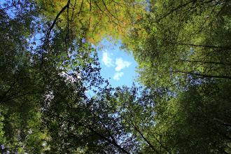 Photo: Big Basin Redwoods