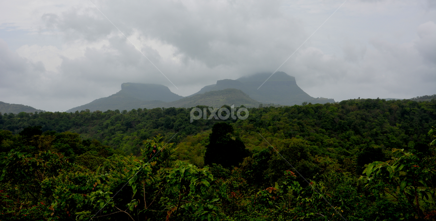 Nature_Greenery beyond eyesight  by प्रसाद जोशी - Landscapes Forests ( green, forest )