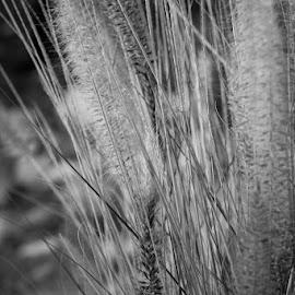 by Martha Irvin - Black & White Flowers & Plants (  )
